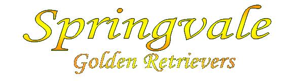 Springvale Golden Retrievers