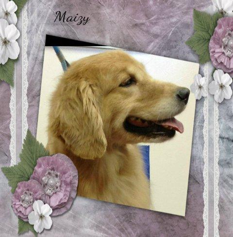 Maizy